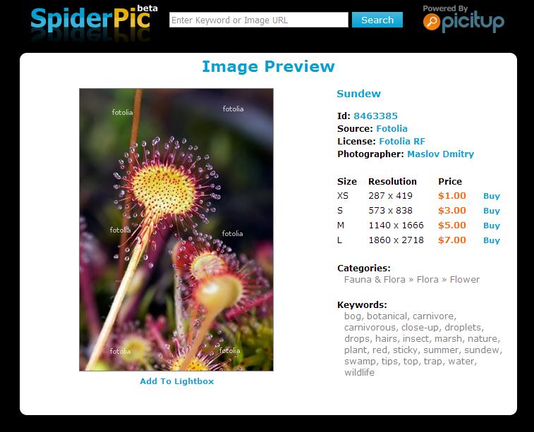 spiderpic-3